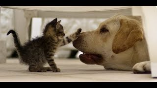Enemy or friend? Funny cats and dogs - a selection of jokes!