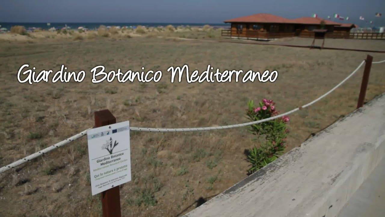 Giardino botanico mediterraneo youtube - Giardino mediterraneo ...