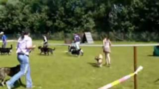 This Video Previously Contained A Copyrighted Audio Track. Due To A Claim By A Copyright Holder, The Audio Track Has Been Muted.     Dog Show Of Mix Breeds