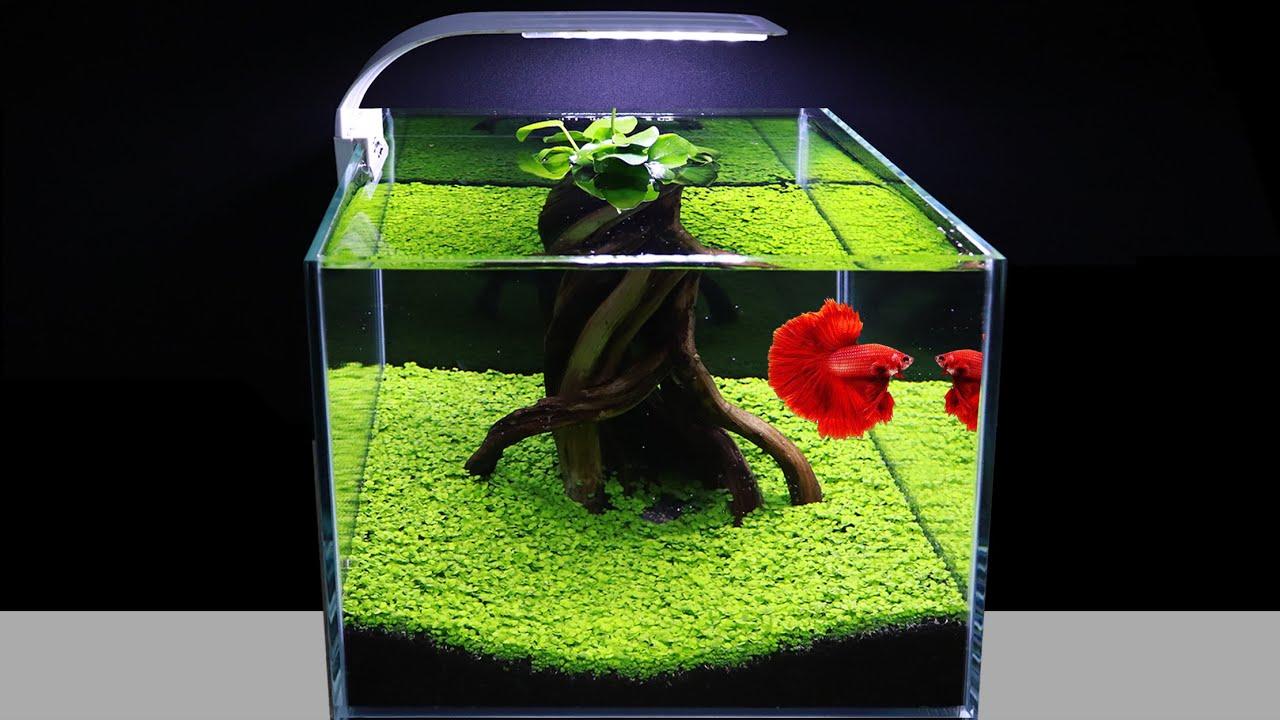 How To Plant Green Carpet In Aquarium For Beginners Amazing Diy Nano Aquascape Cube 30cm No Co2 Youtube