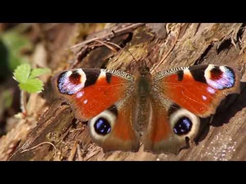 Видео Природа северо-запада россии зрелые
