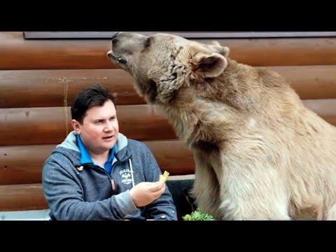 Suami Istri Tinggal Sama Beruang Besar selama 23 Tahun! Mp3