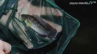 PARAGUAY - Expedition unter Wasser [1]