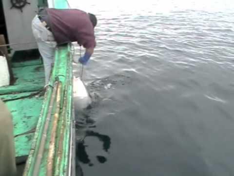 Halibut fishing Centreville