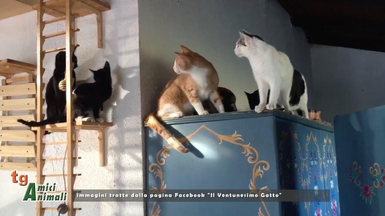 Il Ventunesimo Gatto, quello dell'adozione del cuore