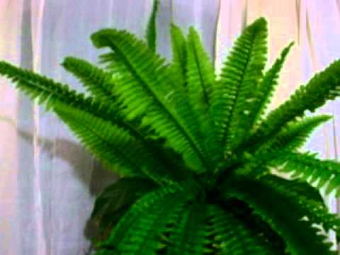 Flores y plantas artificiales youtube - Plantas artificiales decorativas ...