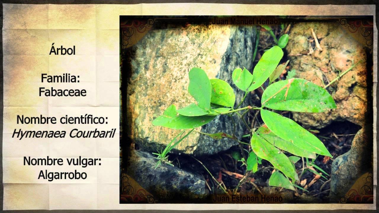 Clasificaci n de plantas rboles y arbustos youtube for Arboles y arbustos para jardin