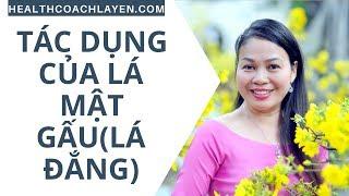 Tác dụng của lá Cây Mật Gấu (CÂY LÁ ĐẮNG) - Health Coach La Yến - Yến Sào Doanh Nhân