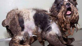 感動 犬猫 虐待保護された動物たちのビフォアアフター その姿に涙が止まらない…愛情という魔法が奇跡を起こす!