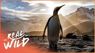 The Incredible Animals Of The Antarctic | Going Wild | Real Wild