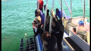 Cape Town   Go Shark Diving