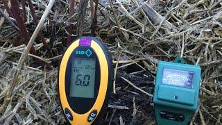 Голубика зимой, кислотность почвы у меня #голубика#дача #огород #сад#садоводство#работывсаду#почва