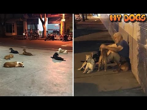 Homeless Man's Six Loyal Dogs Wait 24 Hours Outside Hospital After He Suffers Stroke