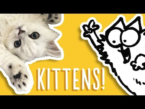 Kittens Being Cute - Simon's Cat Snaps | FAN VIDEOS