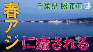 春アジに癒されたい!!只々癒されたい!な千葉県勝浦市 2021.5(1)