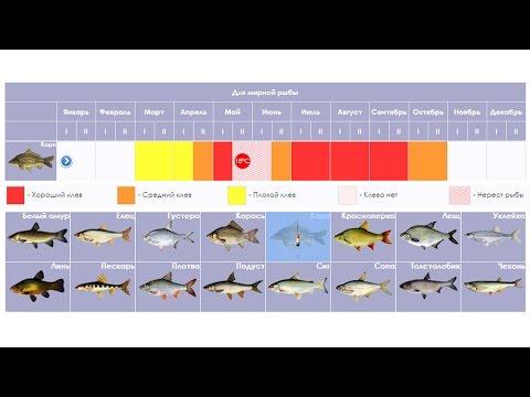 Сезон клева мирной рыбы - рыболовный календарь