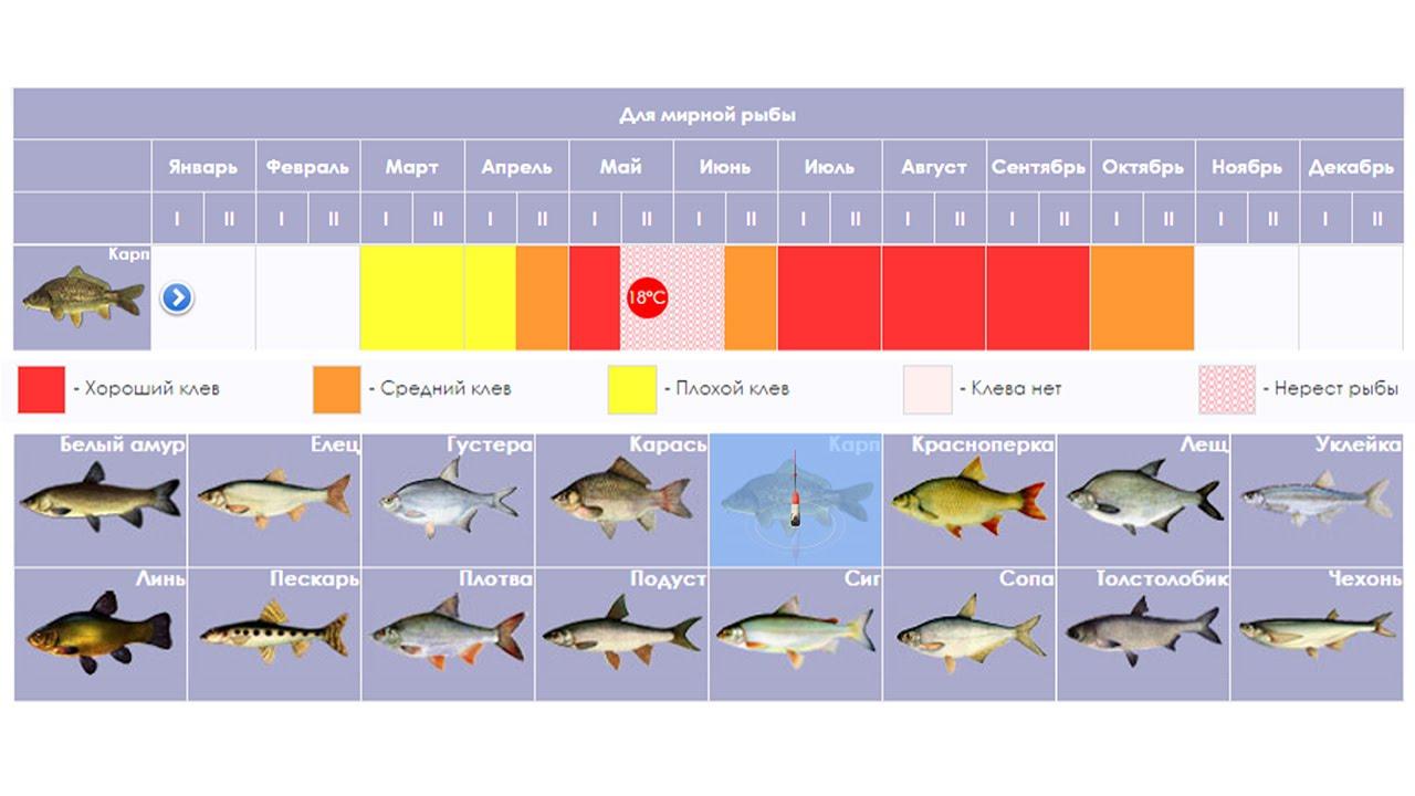календарь клева рыбы
