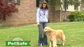 Wireless Dog Fence- Training Your Dog