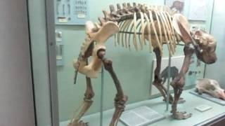 Музей-кости динозавров, гигантских китов, птиц(Ника посетила музей , где хранятся кости динозавров, гигантских китов и акул, рыб и птиц. Много всего интере..., 2016-05-28T20:09:29.000Z)