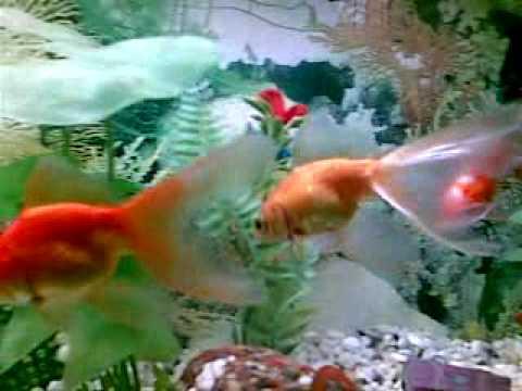 c mo respiran los peces youtube