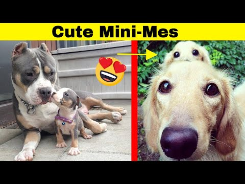 Adorable Dogs With Their Cute Mini-Mes | Adorable Dogs and Puppies
