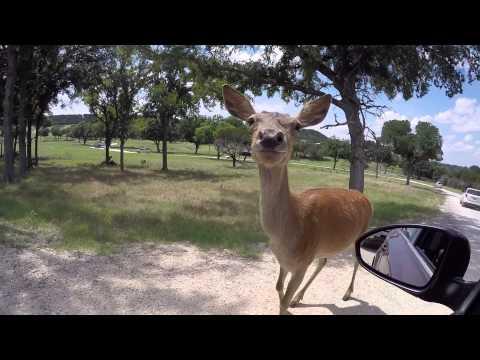 Fossil Rim Wildlife Center, Texas