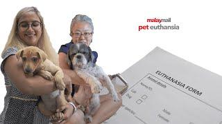 Malay Mail : Pet Euthanasia