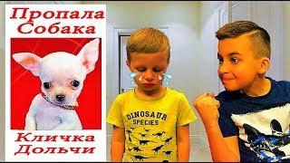 Пропала собака! Богдан потерял нашего щенка Дольчи  Видео для детей