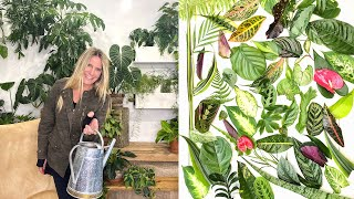 Spring Fling | Get Your Indoor Plants Ready for the Growing Season