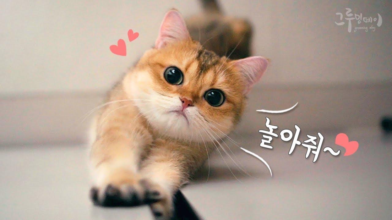 고양이는 포기를 모른다냥!
