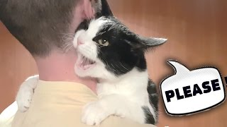 MEOW! Dad! Do not let me go! thumbnail