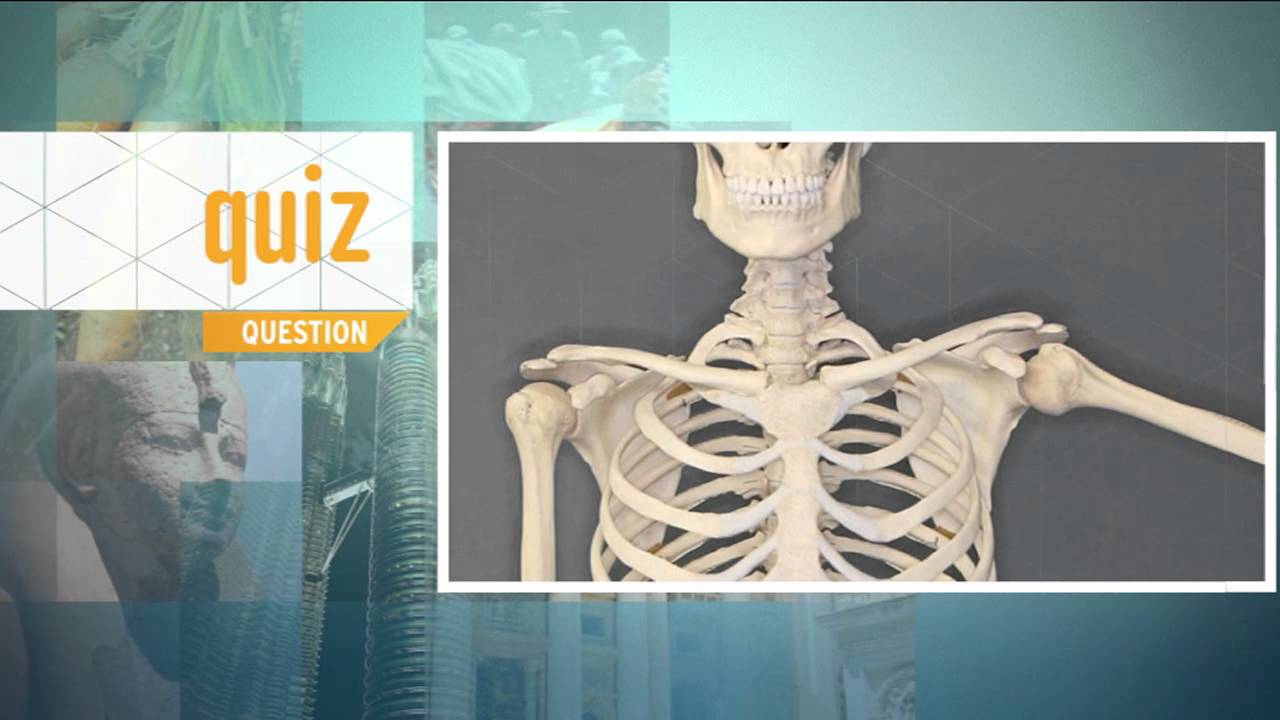 Quiz - What is the real name of the funny bone? - YouTube
