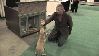Mike Wombacher - Dog Training Tips 2 - Sit, Down, Stand Review - Using Hand Signals