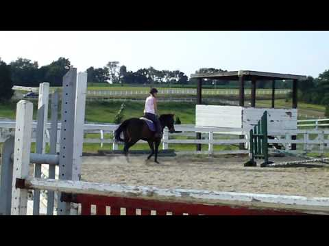 Tuesday Large Pony For sale- trot and canter