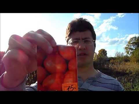 Картофель из семян (Сбор урожая суперэлиты Краса, Императрица).