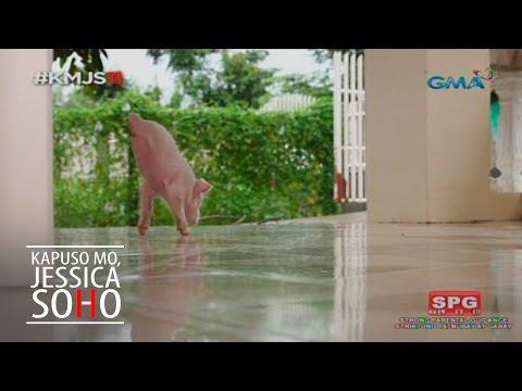 Kapuso Mo, Jessica Soho: Lucky, the pet pig