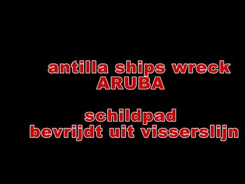 schilpad bevrijdt Antilla Ships wreck ARUBA