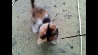 Кошечка-малютка ищет дом. Пенза.