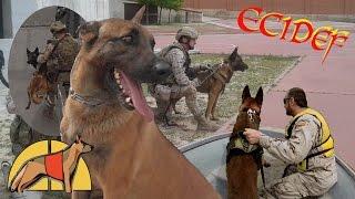 Escuela Cinológica de la Defensa (ECIDEF) | Ejercito Español