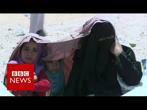 Fears of Falluja 'humanitarian disaster' - BBC News