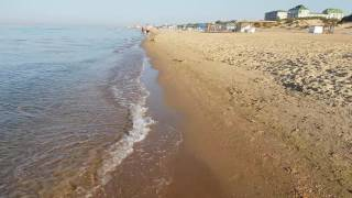 Охота дельфинов возле берега, отчёт Витязево море 7.09.2016