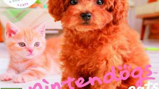 CGRundertow NINTENDOGS + CATS: TOY POODLE & NEW FRIENDS for Nintendo 3DS Video Game Review