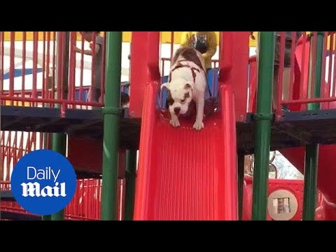 Dog Cuts Kids in Line and Goes Down Slide - Daily Mail