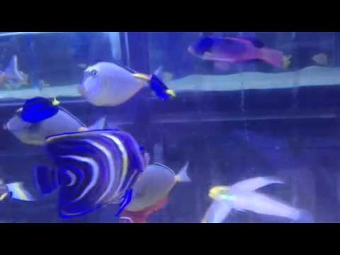 Paul Talbot Talking About When Marine Fish Scratch