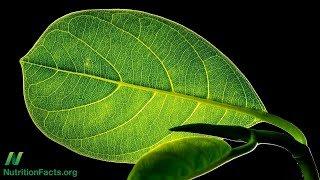 Jak přirozeně regenerovat koenzym Q10