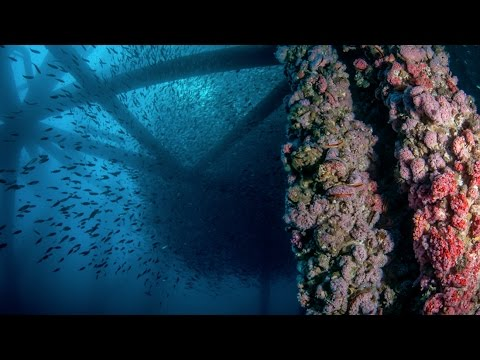 Transforming Oil Rigs in to Thriving Ocean Reefs