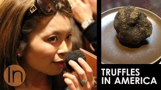Truffles in America