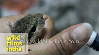 How we feed our adorable abandoned baby squirrel