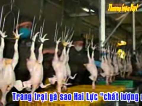 Thương hiệu Việt (www.thv.vn) - Trang Trại Gà Sao Hai Lực