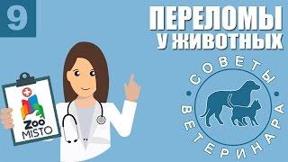 Переломы у животных | Как оказать первую помощь при переломе у собак или кошек | Советы Ветеринара